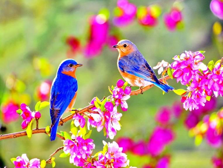 2 oiseaux